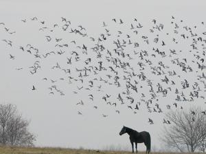 Seagulls Fly Over a Horse on a Foggy Christmas Day