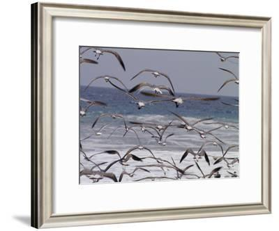 Seagulls Fly over Surf-Raul Touzon-Framed Photographic Print
