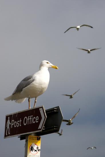 Seagulls in Padstow Harbour, Cornwall, England-Adam Burton-Photographic Print