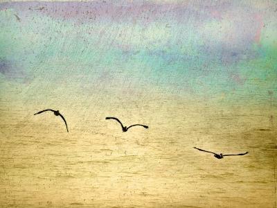 Seagulls in the Sky II-Ynon Mabat-Art Print