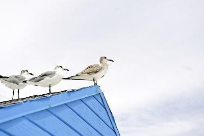 Seagulls on Roof of Kiosk-Axel Schmies-Photographic Print