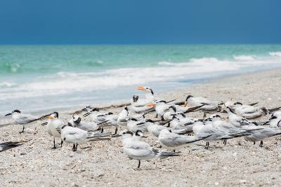 Seagulls on the Beach-Philippe Hugonnard-Photographic Print