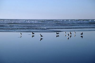 Seagulls Standing on the Shore as the Waves Roll In-Design Pics Inc-Photographic Print