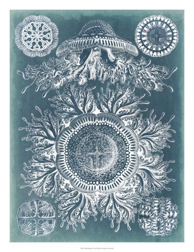 Sealife Blueprint I-Vision Studio-Giclee Print