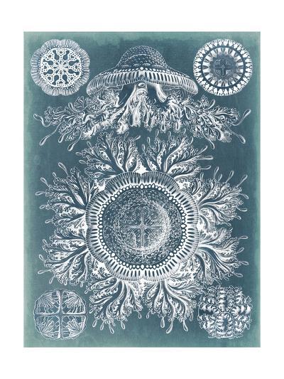 Sealife Blueprint I-Vision Studio-Art Print