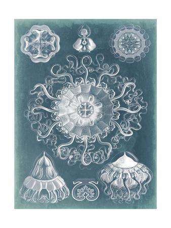 Sealife Blueprint II-Vision Studio-Art Print