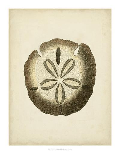 Sealife Collection IX--Giclee Print