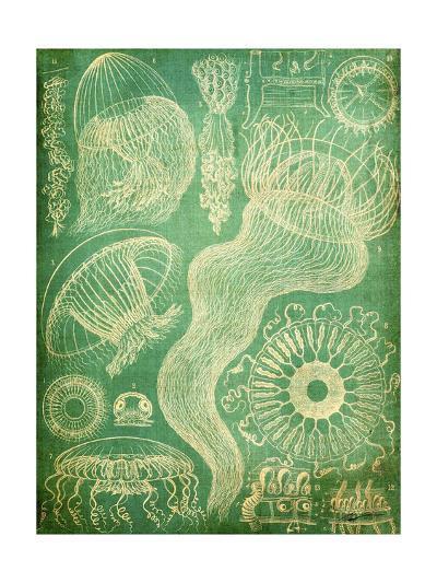 Sealife I-John Butler-Art Print