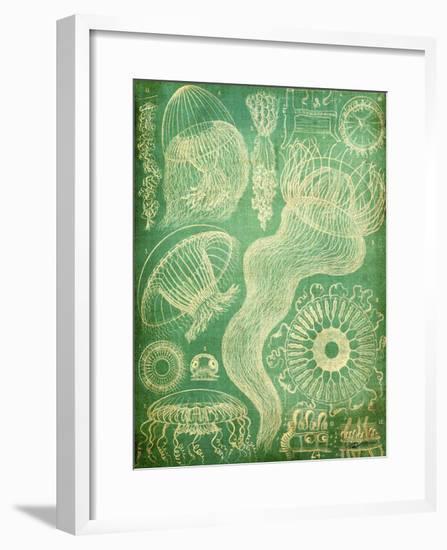 Sealife I-John Butler-Framed Art Print