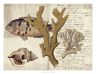 Sealife Journal I-Vision Studio-Giclee Print