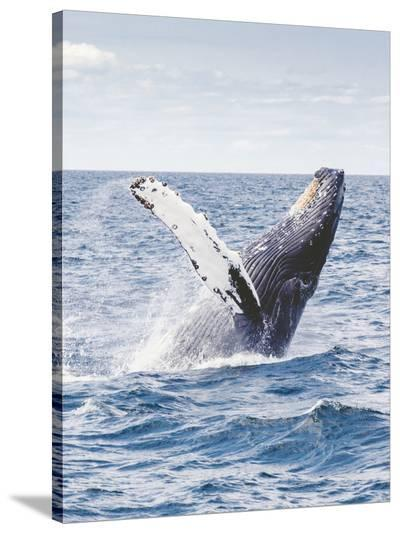 Sealife Ocean Whale Underwater-Wonderful Dream-Stretched Canvas Print