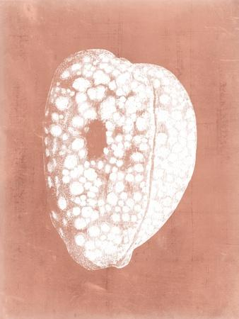 https://imgc.artprintimages.com/img/print/sealife-on-coral-iii_u-l-pyw1p30.jpg?p=0