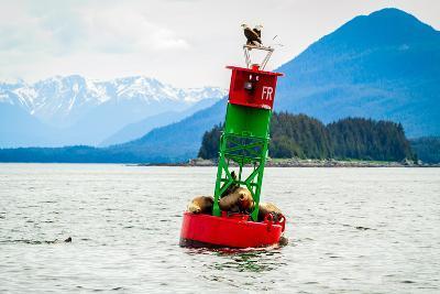 Seals and Bald Eagles on the inside Passage near Juneau, Alaska.-Kushal Bose-Photographic Print