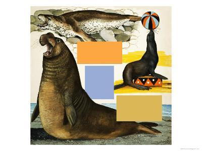 Seals and Sea-Lions, Including Seal Balancing Ball on Nose-Arthur Oxenham-Giclee Print