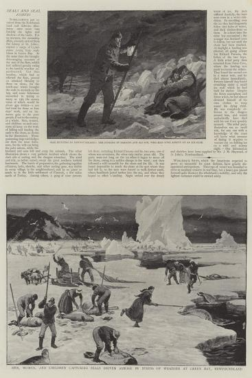 Seals and Seal Fisheries--Giclee Print