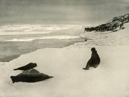 'Seals at the Ice-Edge', c1908, (1909)-Unknown-Photographic Print