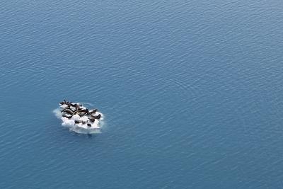 Seals, Phocidae, Sunbathing on an Iceberg in the Kenai Peninsula-Jill Schneider-Photographic Print