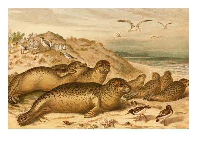 Seals-F^W^ Kuhnert-Art Print