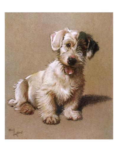 Sealyham Terrier with its Tongue Hanging Out--Giclee Print