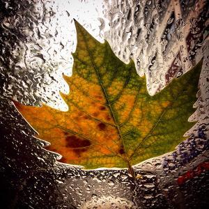 A Colorful Leaf That Has Fallen on a Car Windshield by Sean Gallagher