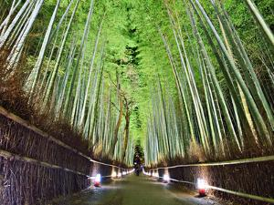 The Bamboo Forest of Kyoto, Japan by Sean Pavone