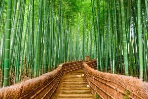 Kyoto, Japan at the Bamboo Forest. by SeanPavonePhoto