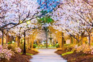Macon, Georgia, USA in the Spring. by SeanPavonePhoto