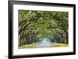 Savannah, Georgia, USA Oak Tree Lined Road at Historic Wormsloe Plantation. by SeanPavonePhoto