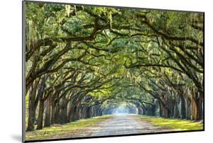 Savannah, Georgia, USA Oak Tree Lined Road at Historic Wormsloe Plantation. by SeanPavonePhoto