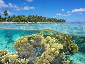 Split View over and under Water Surface, Coral on Shore of Huahine Island, French Polynesia by Seaphotoart