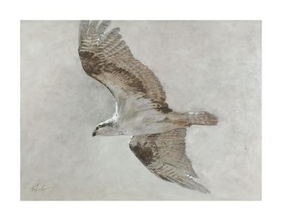 Searching Osprey-Todd Telander-Art Print
