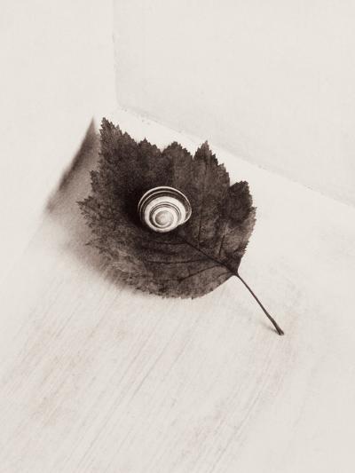 Seashell and Leaf-Graeme Harris-Photographic Print