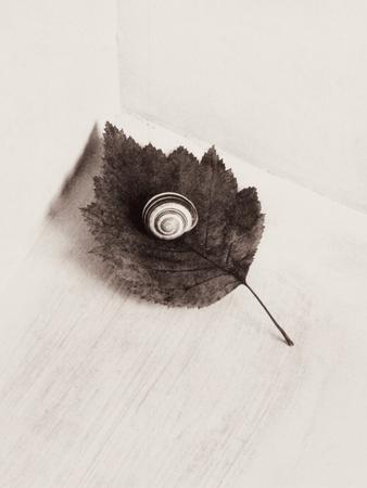 https://imgc.artprintimages.com/img/print/seashell-and-leaf_u-l-po24hg0.jpg?p=0