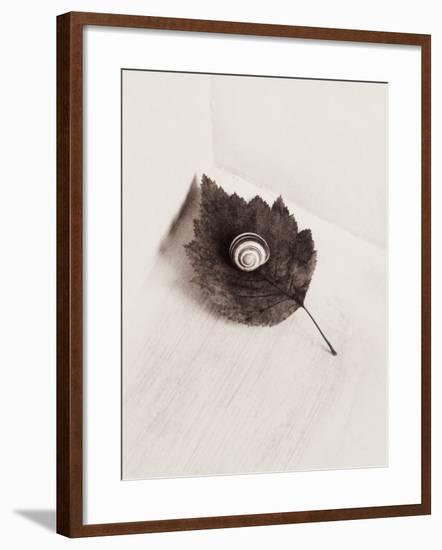 Seashell and Leaf-Graeme Harris-Framed Photographic Print