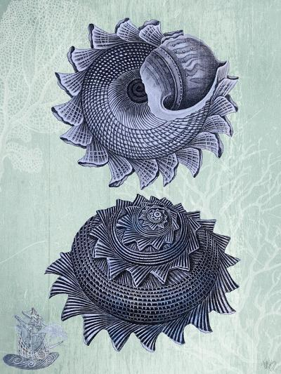 Seashell Collection 2 b-Fab Funky-Art Print