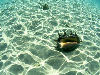 Seashell, Fiji Islands-Scott Winer-Photographic Print