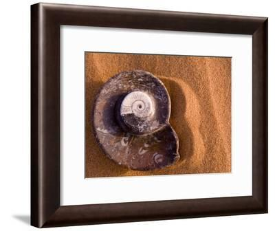 Seashell Fossil in the Sand-Abraham Nowitz-Framed Photographic Print