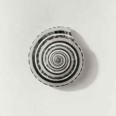 Seashell-Graeme Harris-Photographic Print