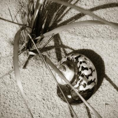 Seashells II-Alan Hausenflock-Photographic Print
