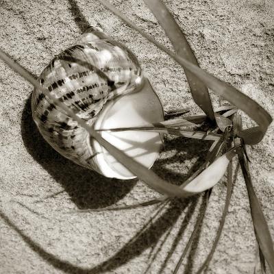 Seashells III-Alan Hausenflock-Photographic Print
