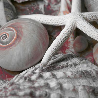 Seashells in Pink II--Art Print