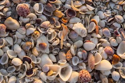Seashells on Sanibel Island, Florida, USA-Chuck Haney-Photographic Print