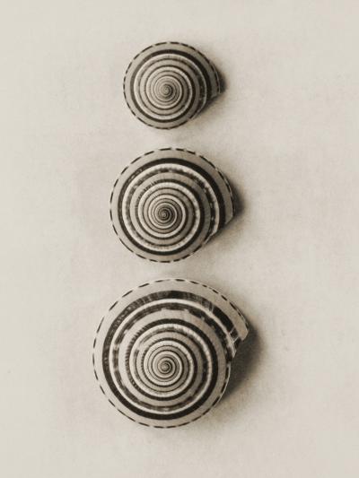 Seashells-Graeme Harris-Photographic Print