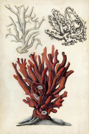 Seashore Field Notes VI-Naomi McCavitt-Art Print