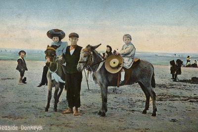 Seaside Donkeys--Photographic Print
