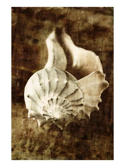 Seaside Portrait III-Thea Schrack-Premium Photographic Print