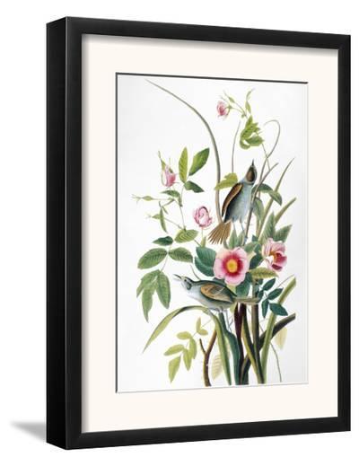 Seaside Sparrow, 1858-John James Audubon-Framed Giclee Print