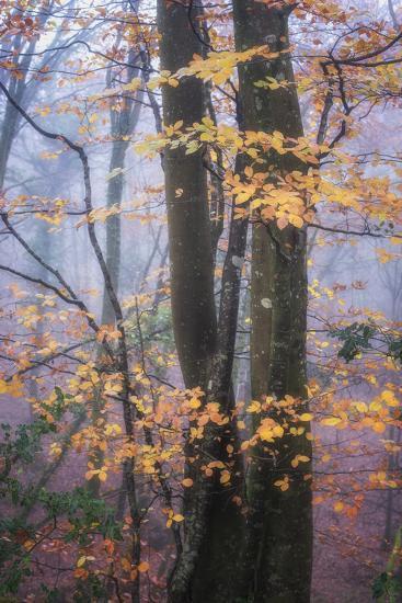 Season Details-Philippe Manguin-Photographic Print