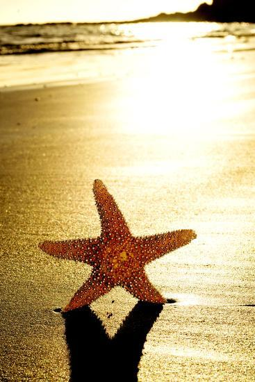 Seastar on the Shore of a Beach at Sunset-nito-Photographic Print