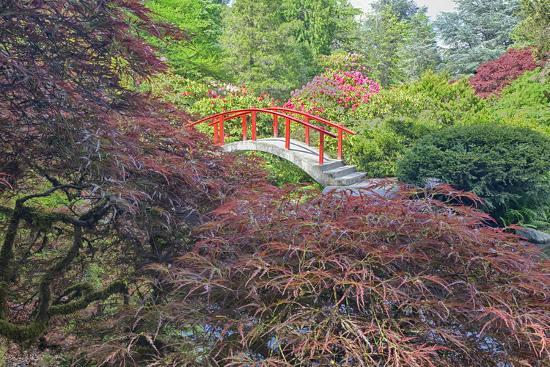 Seattle, Kubota Gardens, Spring Flowers and Japanese Maple with Moon Bridge in Reflection-Terry Eggers-Photographic Print